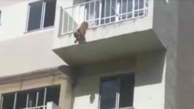 Assista: Cão pula de varanda para se salvar e outro morre 'derretido'