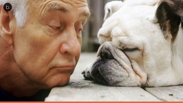 Vídeo: Ter um cachorro em casa pode salvar sua vida, diz estudo