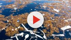 Honduras deputy mayor accuses Guatemala over plastic island pollution