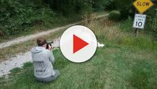 Vídeo - Após tirar foto com 20 mil abelhas, grávida recebe notícia triste