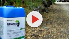 Glifosato: ambientalisti preoccupati per pasta contaminata