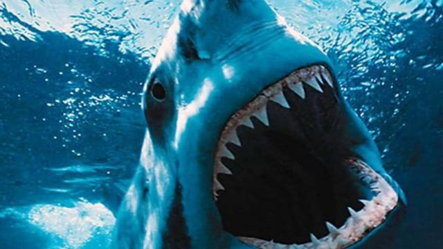 Costa Rica, turista muore attaccata da uno squalo tigre