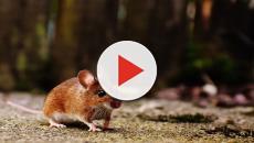 Famiglia di quattro persone vive tra topi e rifiuti