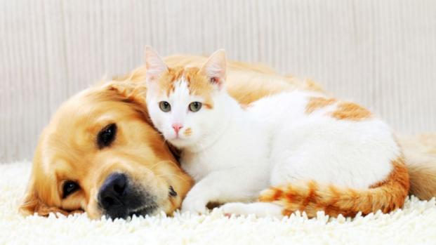 Science finally proves Dogs are smarter than Cats