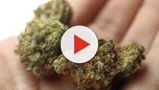De la tierra crece y el humano la prohíbe: Marihuana a lo largo de la historia