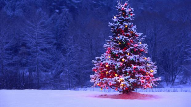 Más de 13.000 árboles de Navidad fueron regresados a Estados Unidos