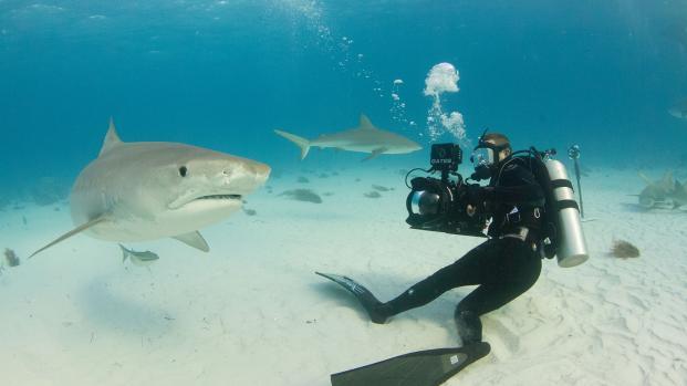 Encontrado tubarão que pode ter inacreditáveis 512 anos de idade