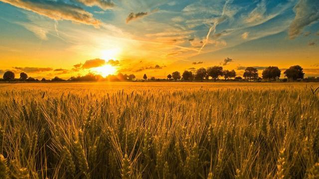 DA: Crecimiento Q3 en la producción de palay más notable para el sector agrícola