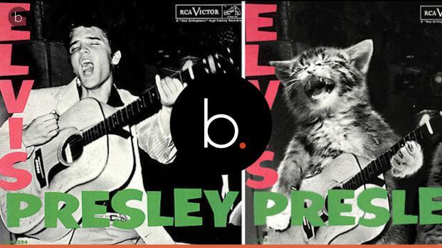 Vídeo: Artista coloca gatinhos fofos em capas de álbuns clássicos