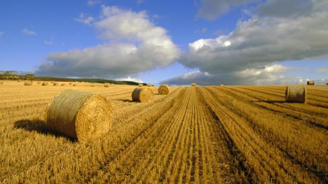 Gasto del gobierno y agricultura elevan el PIB en segundo trimestre 2017