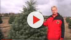 Perfect Christmas trees are possible with science