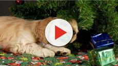 30 Times Dogs And Cats Hilariously Ruined Christmas