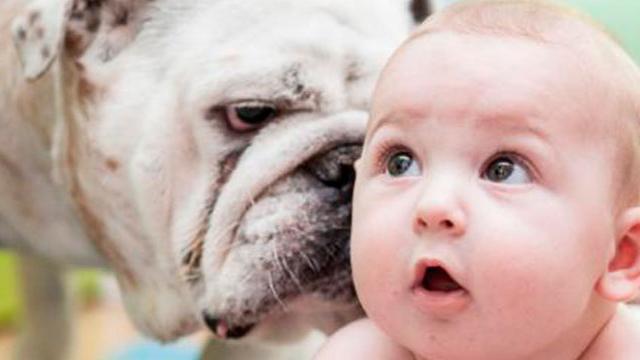 Las mascotas y sus beneficios con los recién nacidos