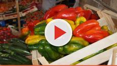 Nuove iniziative per gli agricoltori: nasce il progetto
