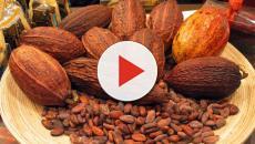 Beneficios del cacao para la salud y su posible extinción