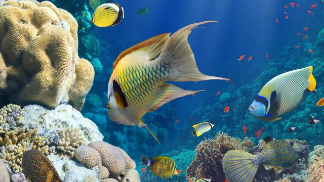 Blanqueamiento de arrecifes de coral 'la nueva normal'