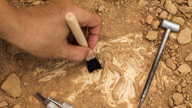 Bestia fósil recién descubierta relacionada con el tiburón más grande
