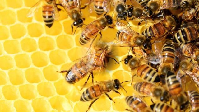 Un fungicida agrícola atrae a las abejas melíferas