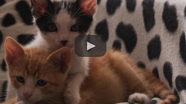 Tractive anuncia su primer collar de rastreo GPS para gatos