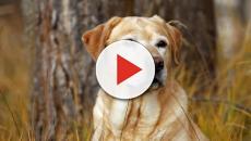 Vídeo: mulher transa com cachorro, filma e vai presa