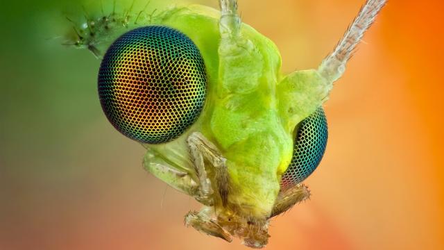Huevos del zoo de Bristol aumentan las esperanzas de insectos