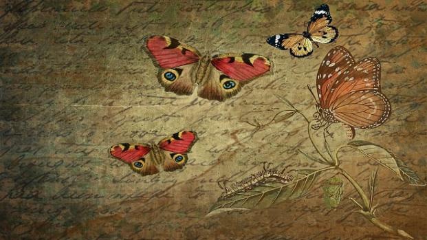 La sensibilidad de las mariposas las convierte en un indicador  bioclimático