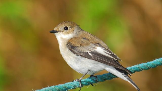 La contaminación ligera atrae a los pájaros a las áreas urbanas