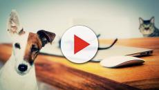 Cani e gatti: parlare con loro potrebbe diventare realtà