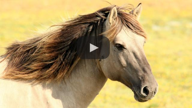 British Horseracing Authority anuncia la revisión de las normas antidopaje