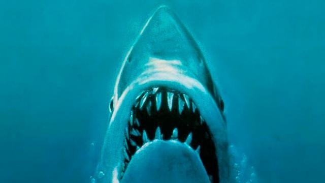 Los tiburones masacrados en México, una historia que no termina