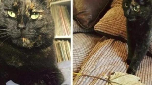 Baloo, la gattina che riempi di coccole e doni il proprio padrone