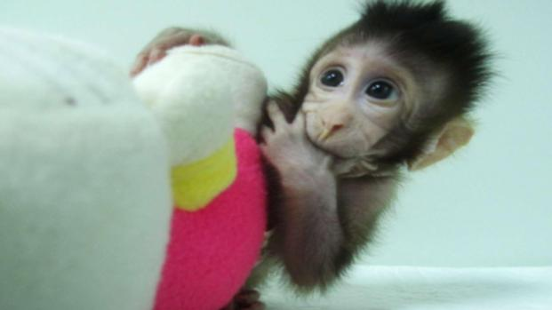Scandalo Volkswagen: usavano scimmie per sperimentare i gas di scarico