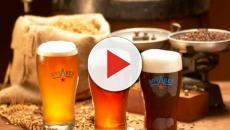 La cerveza artesanal y sus propiedades benéficas