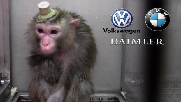 Nuovi guai per le case automobilistiche tedesche Volkswagen, Bmw e Daimler
