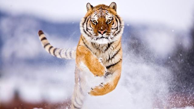 Hacer el caso - Otra vez - para salvar especies en peligro (Op-Ed)