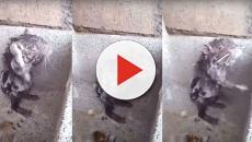 Assista: Saiba se o vídeo de rato tomando banho é real e ele está sofrendo
