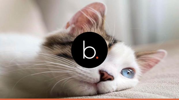 Conheça 5 medicamentos que podem levar seu gato à morte