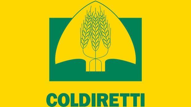 Coldiretti denuncia: 'L'UE legalizza il made in Italy tarocco'