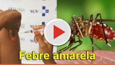 Assista: Febre Amarela: Saiba tudo sobre a vacinação