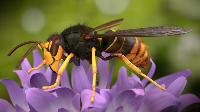 Enfoque novedoso podría ayudar a controlar el impacto de las especies invasoras