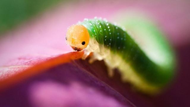 Científicos lidian con gusanos para mejorar la convivencia con la vida silvestre