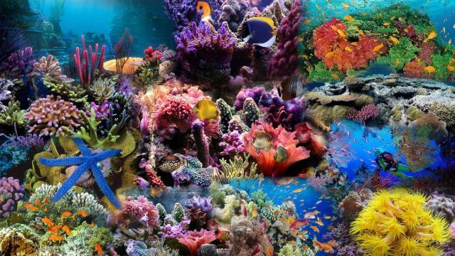 La acidificación de los océanos debilita los esqueletos de coral