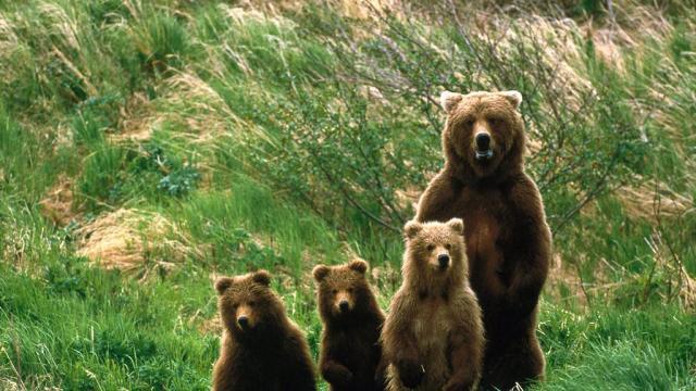 Los osos evitan los senderos con actividad recreativa motorizada