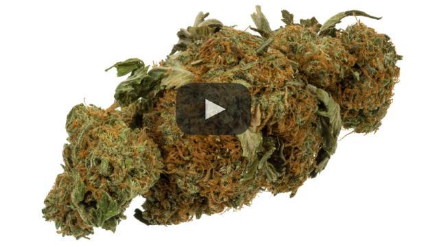 Condenas por posesión de marihuana serán borradas en Estados Unidos