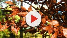 Los árboles de hoja caduca suelen florecer tras una caída de hojas estacional