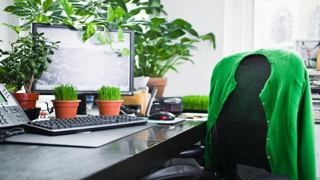 9 consejos para la protección del medio ambiente (ecología) en la oficina