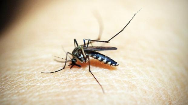 Zanzare killer, è allarme anche in Europa