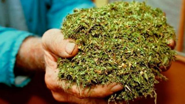 ¿Legalizaremos la marihuana en México?
