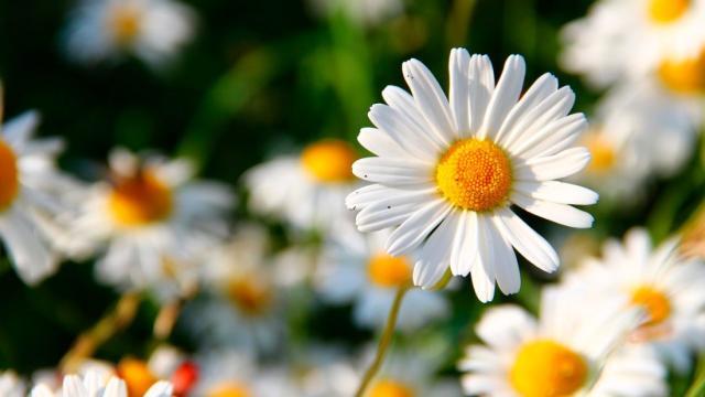 ¿Cuándo se originaron las flores?
