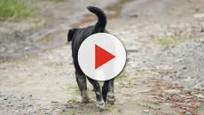 Mondiali Russia 2018, la denuncia degli animalisti: cani randagi massacrati